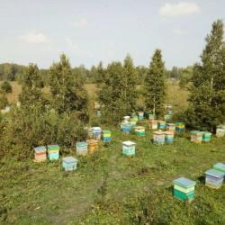 Луговой сибирский мёд. Победитель конкурса!