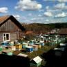 Подтаёжный мёд