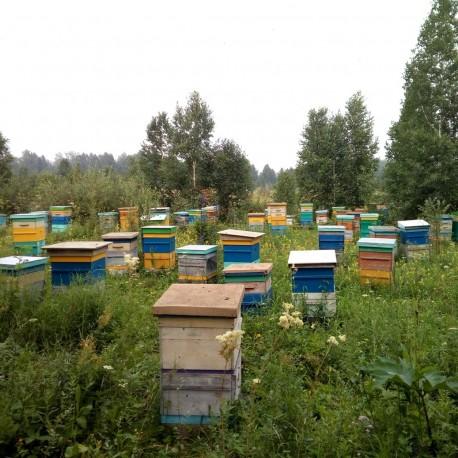 Клеверный мёд, 2019г