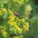 Лесной мёд, 2018г