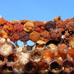 Перга - хлебина, пчелиный хлеб, 330г