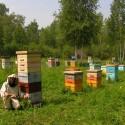 Луговой сибирский мёд, 2016г
