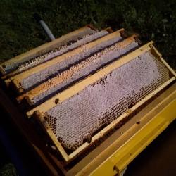Мёд в сотах, 2019г