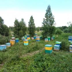 Весенний мёд